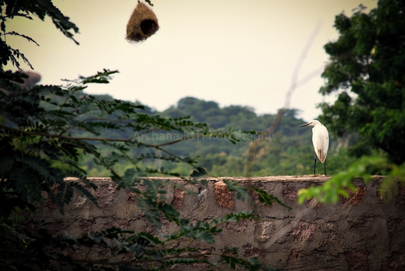 Bird & Nest