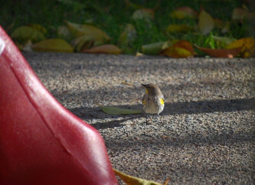 A-Bird1