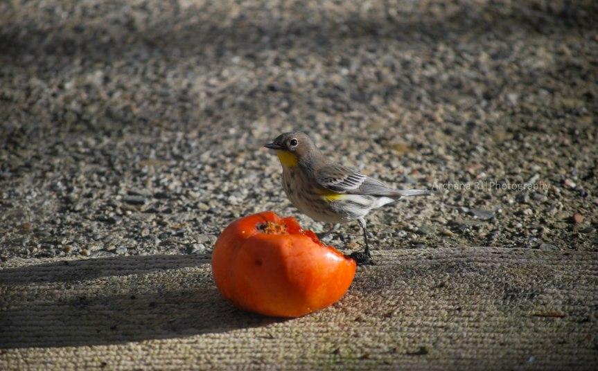 A-Bird2
