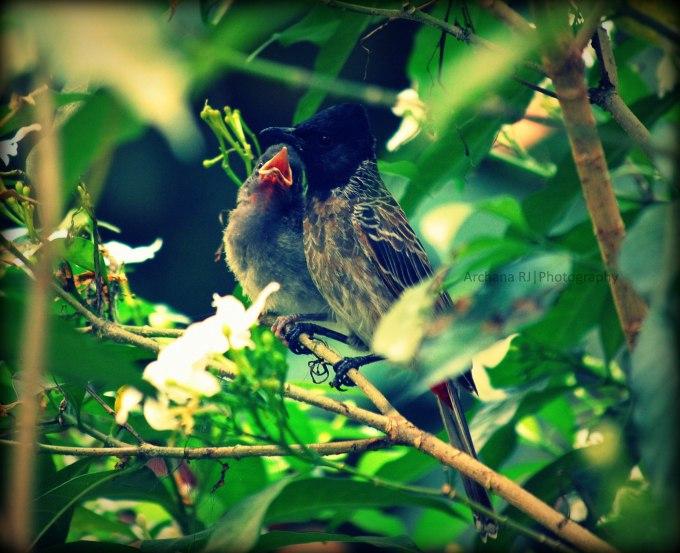 A-Birdie