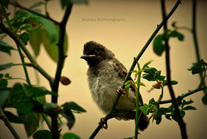 A-Birdieb