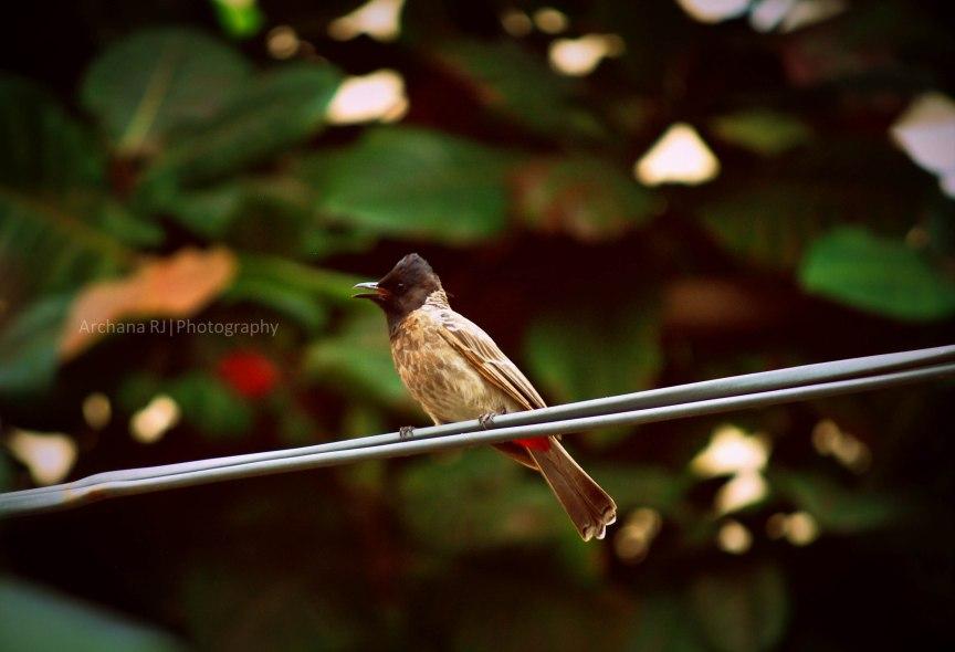 A-BirdieM
