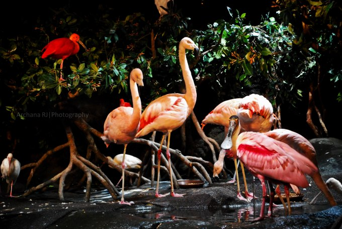 pink flamingos (1 of 1)
