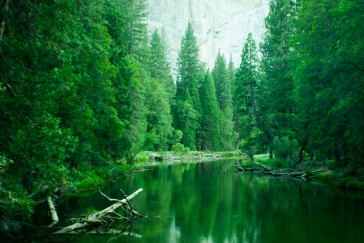 Yosemite National Park (Landscape)