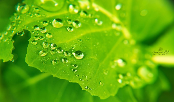 Leaf droplets-2